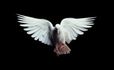 اگر آرزوی «صلح» دارید، «عدالت» کشت کنید